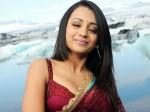 Trisha Debut Kannada Film Through Cm Aid