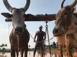 Agriculture Cinema Season Tamil