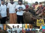 Gv Prakash Gives 500 Calves Gaja Victims