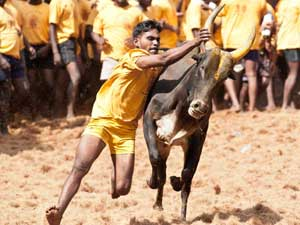 Jallikattu to be filmed in 3D