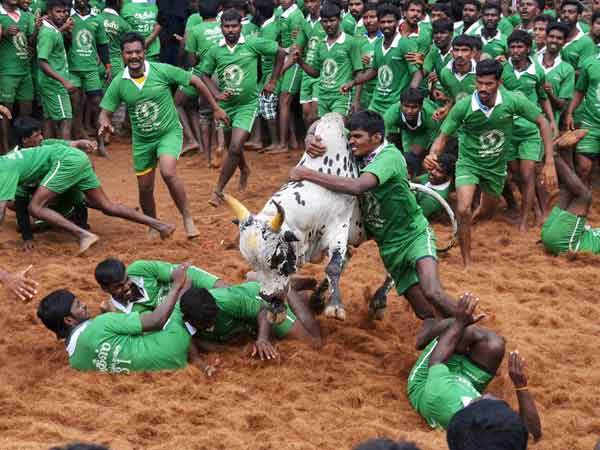 Ilami, a movie on Jallikkattu