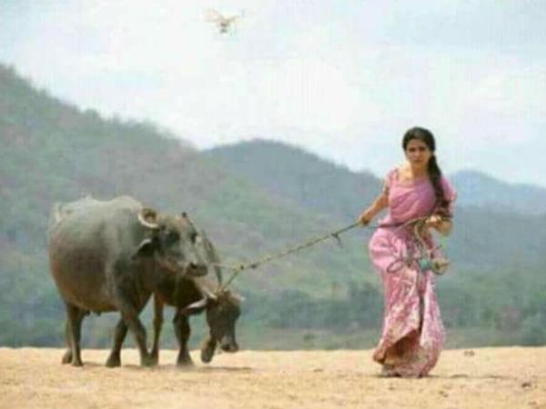 எருமை மாடு மேய்க்கும் சமந்தா... வைரலாகும் லேட்டஸ்ட் படங்கள்!