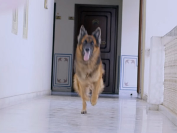Rocky review: Its a police dog story