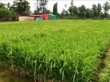 http://tamil.filmibeat.com/img/2018/02/agriculture-former-12-600-1519626170.jpg